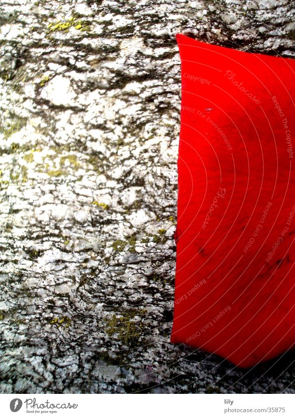 Rosenblatt #1 Natur schön rot Farbe grau Stein Rosenblätter