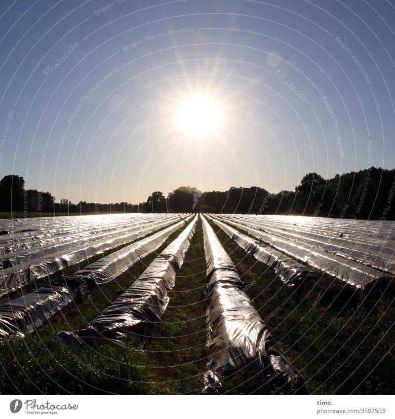 saisonal systemrelevant | corona thoughts spargelfeld gegenlicht plastikbahnen waldrand erntezeit glitzern kuntstoff folie plastikfolie kunststofffolie