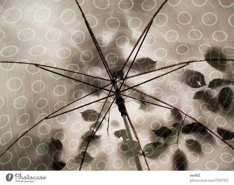 Rettungsschirm Natur Pflanze Klima Wetter schlechtes Wetter Regen Baum Blatt Schirm Metall Kunststoff nass Design Fürsorge Umwelt Schutz Schutzdach Gestell