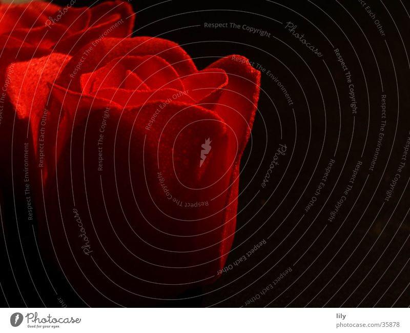 red rose rot schwarz Rose Romantik Kitsch Kosmetik Seife Rosenblüte