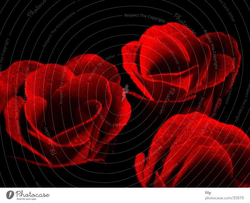 red roses rot schwarz Rose Romantik Kitsch Kosmetik Valentinstag Seife Rosenblüte