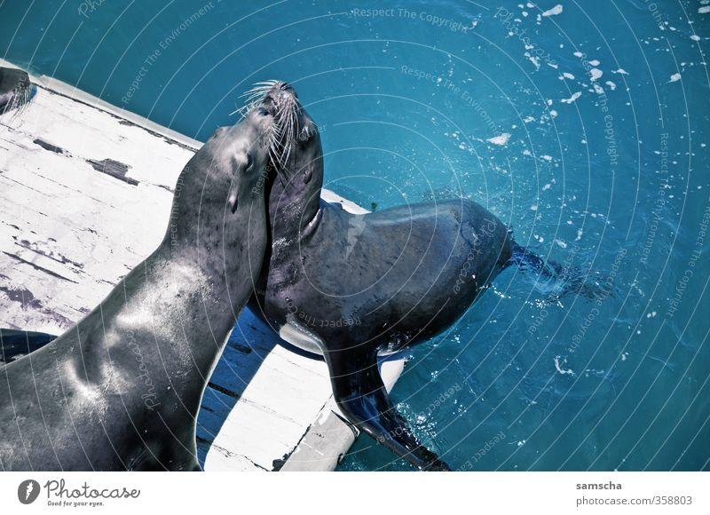 Seehunde Natur Ferien & Urlaub & Reisen Wasser Sommer Meer Tier Umwelt Liebe Küste wild Tierpaar Wildtier Tourismus Ausflug Tiergruppe Abenteuer