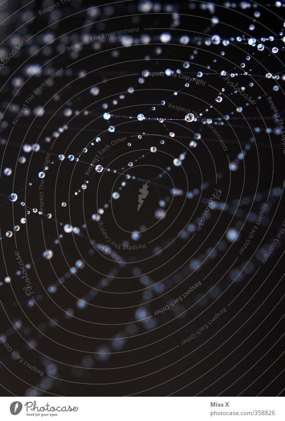 Netzwerk Wassertropfen Tier Spinne nass netzartig Tau Tropfen Spinnennetz Farbfoto Nahaufnahme Makroaufnahme Menschenleer Textfreiraum unten Hintergrund neutral
