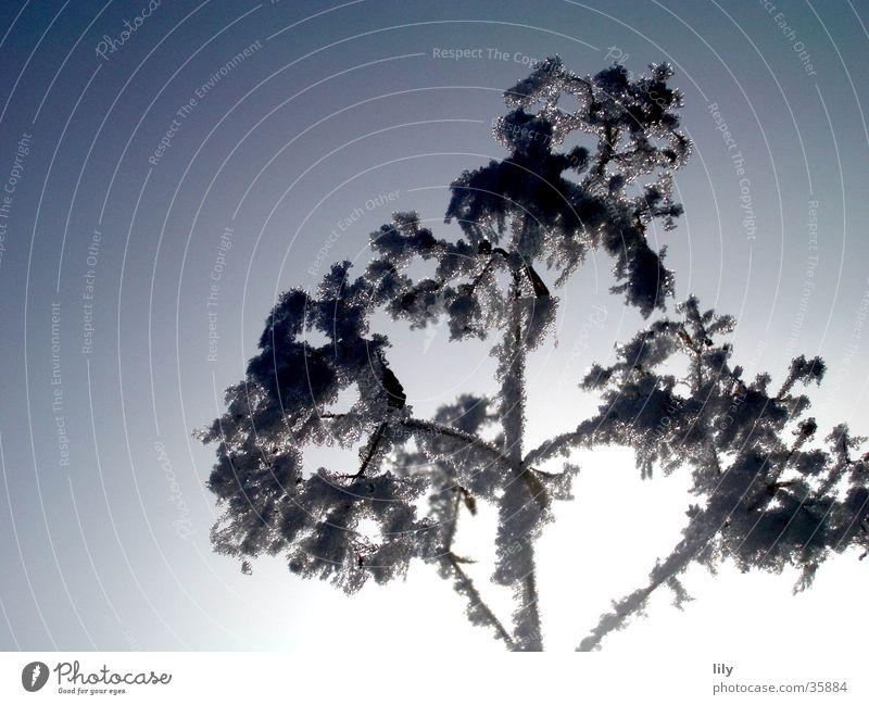 Eisblume #2 kalt Winter gefroren Raureif Frost Ast Himmel Kontrast