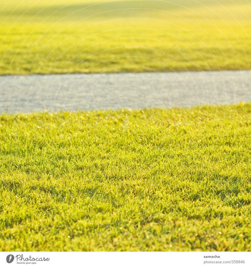 der Sommer ist da! Natur schön Sonne Erholung Umwelt Wiese Wärme Gras Freiheit Glück Garten Park genießen Rasen Sonnenbad