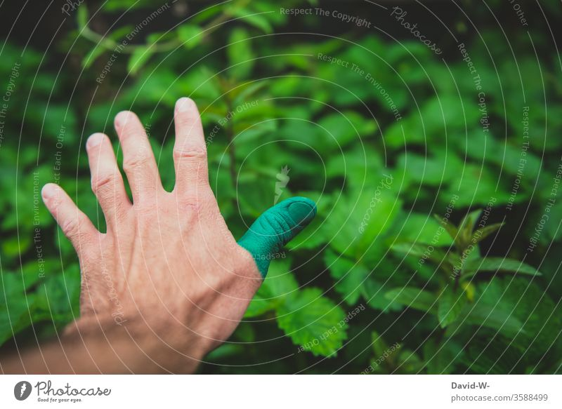 Natur - einen grünen Daumen haben Hand Grüner Daumen Naturliebe Pflanze Farbfoto Blatt Gärtner Garten Sommer Wachstum Detailaufnahme Umwelt Mensch Gartenarbeit