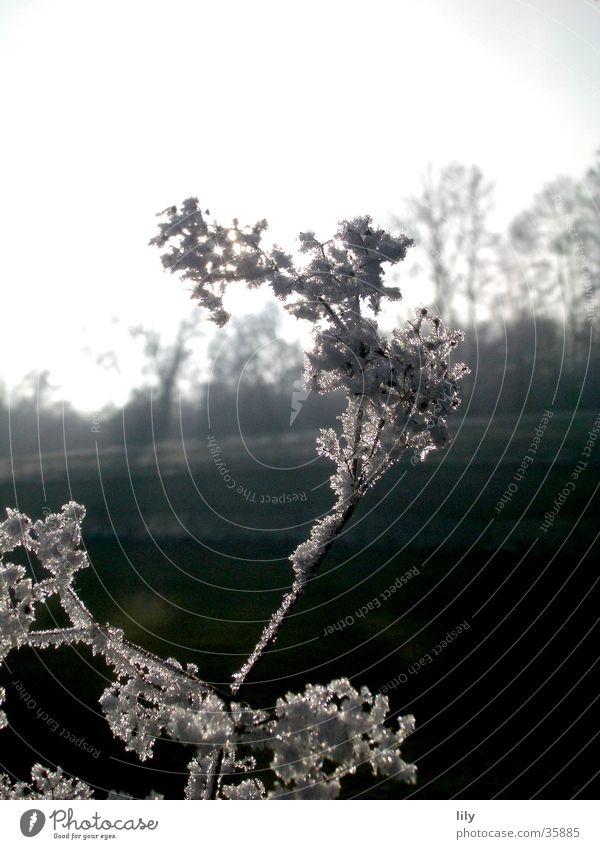 frostig #2 Winter kalt Frost zerbrechlich Raureif Klirren