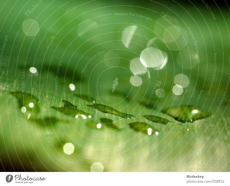 heavenly tears (5) Natur grün Wasser weiß Sommer Pflanze Blatt schwarz Umwelt gelb kalt grau Beleuchtung natürlich Park glänzend