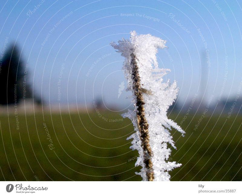 Frostästchen #3 Himmel weiß grün blau Winter kalt Eis Ast zerbrechlich Raureif Klirren