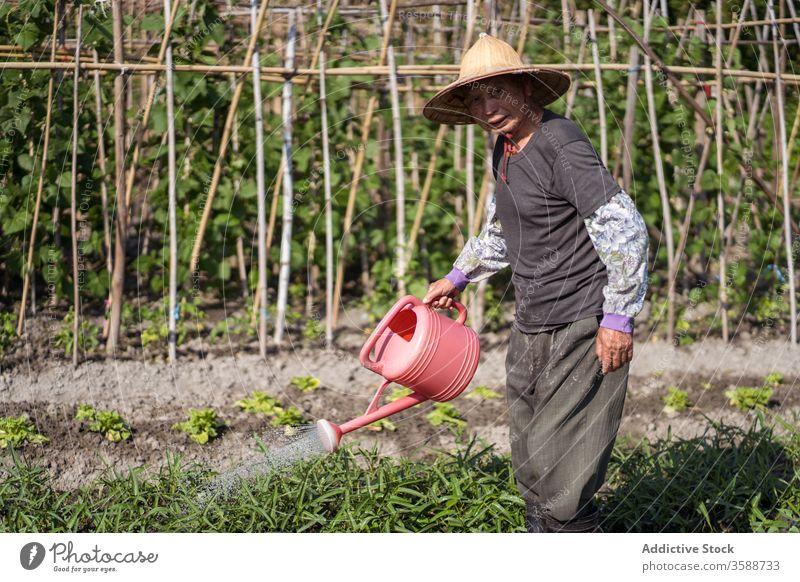 Ethnischer Bauer bewässert Pflanzen auf Plantage an heißem Sommertag Landwirt Wasser Schonung Gießkanne Garten Orientalisch Pflege Ackerbau Agronomie