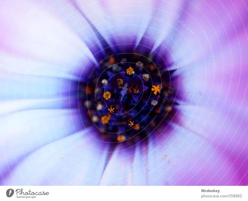 Ich bin wie jene Blume Natur Pflanze Blüte Park Blühend Duft leuchten exotisch schön einzigartig verrückt blau braun mehrfarbig grau violett orange rosa schwarz