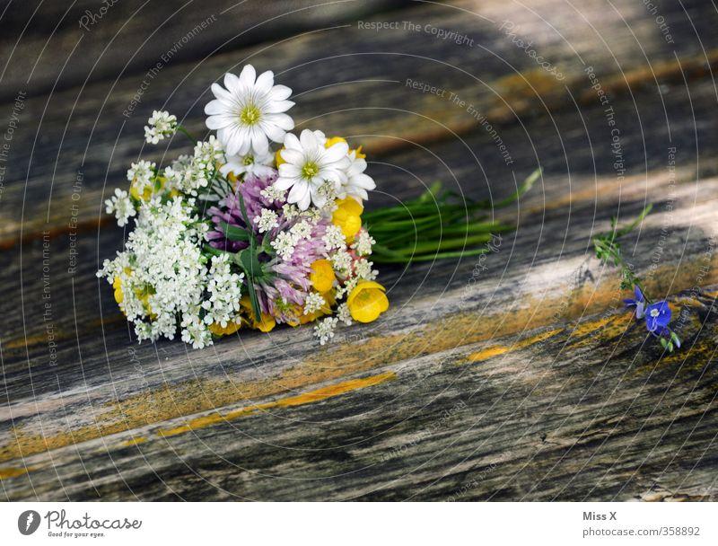 Blumenstrauß Dekoration & Verzierung Valentinstag Muttertag Hochzeit Frühling Sommer Blüte Blühend Duft Verliebtheit Romantik Wiesenblume Holz Parkbank pflücken