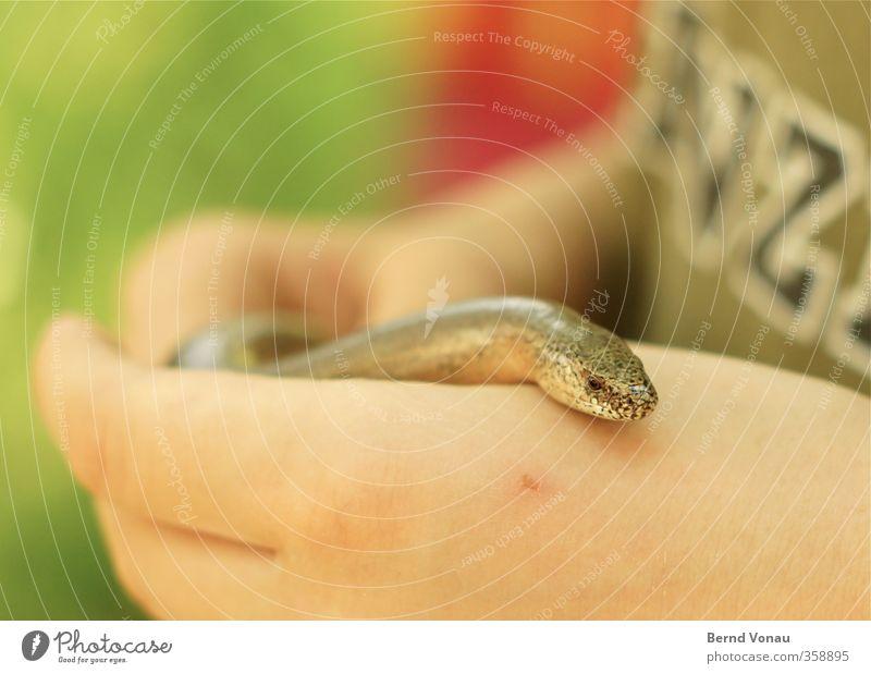 Von wegen Blind! Mensch Kind Natur grün Hand Tier Spielen Junge Kopf braun Kindheit Finger beobachten Neugier festhalten Tiergesicht