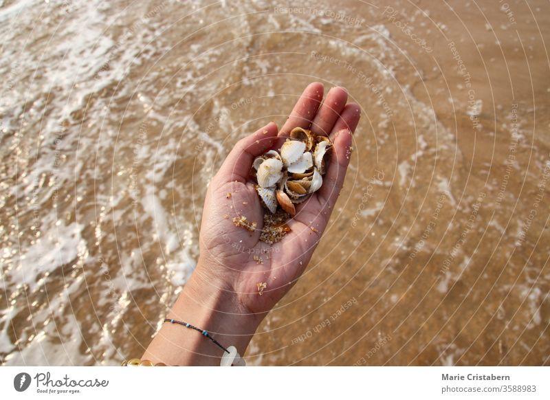 Den Sommermoment am Strand genießen und Muscheln sammeln irdische Beschaffenheit die neue Normalität sommer während covid-19 soziale Distanzierung