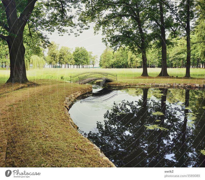 Schwungvoll Teich Park stille Brücke Bogenbrücke Brückengeländer geschwungen elegant Bäume Wasser Wiese Pflanzen Außenaufnahme Farbfoto Menschenleer Natur Baum