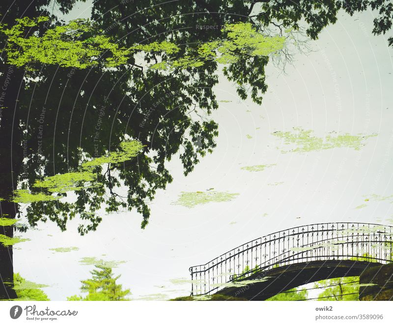 Sinnbild Detailaufnahme 180° gedreht auf dem Kopf Spiegelbild Spiegelung Reflexion & Spiegelung Teich Park Brücke elegant Brückengeländer Metall geschwungen
