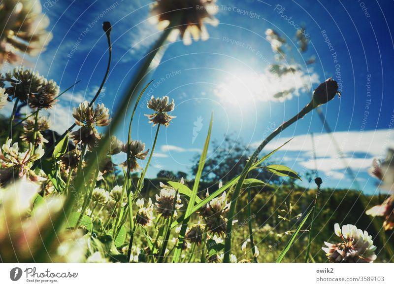 Kleine Landschaft Wiese Gras Froschperspektive unten Halme leuchten wachsen blühen Wiesenblumen Schwache Tiefenschärfe Himmel Wolken Sonne Sonnenlicht