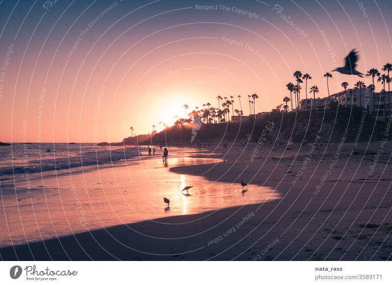Laguna Beach im schönen violetten Licht des Sonnenuntergangs Strand Orange County Kalifornien Meer pazifik Küste Ansicht Natur südländisch Küstenstreifen purpur