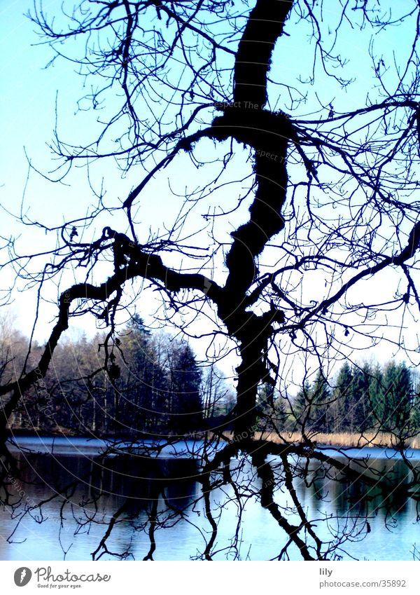 Baumblitz Natur blau Wald See Ast Blitze Geäst faszinierend