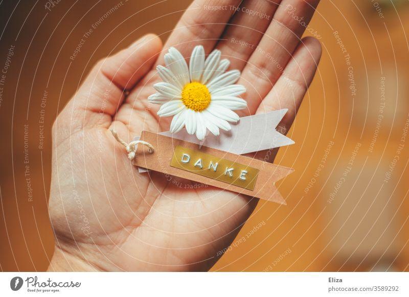 1000 I DANKE Photocase Danke Blume bedanken wertschätzend Hilfe Dankeschön dankbar Blüte Etikett Hand halten nett Geschenk blühend Margeritte Anhänger