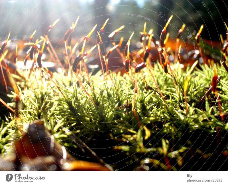 Bestrahltes Blatt Gras Wald Waldboden Herbst Licht Sonnenstrahlen grün braun Moos