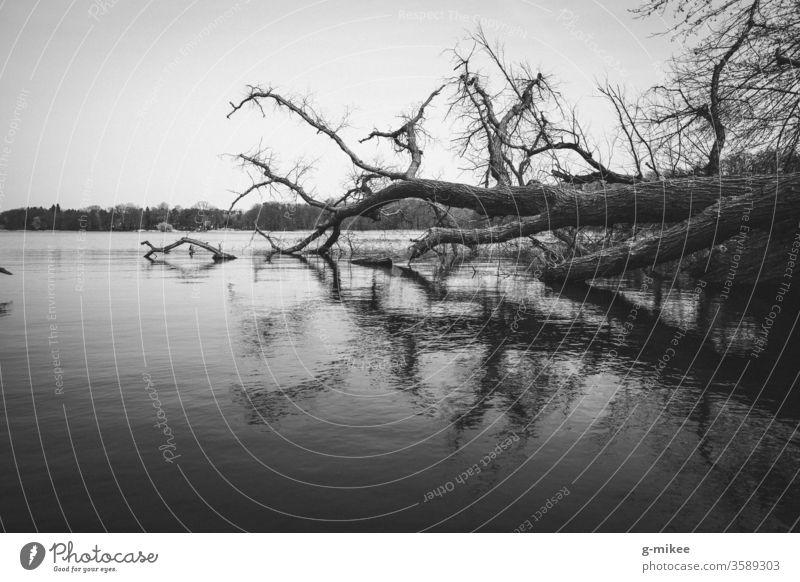 Umgefallener Baum im See Reflexion schwarz-weiß Wald Natur Park Außenaufnahme Landschaft Ruhe Menschenleer melancholie Seeufer Umwelt ruhig Geäst Wasser