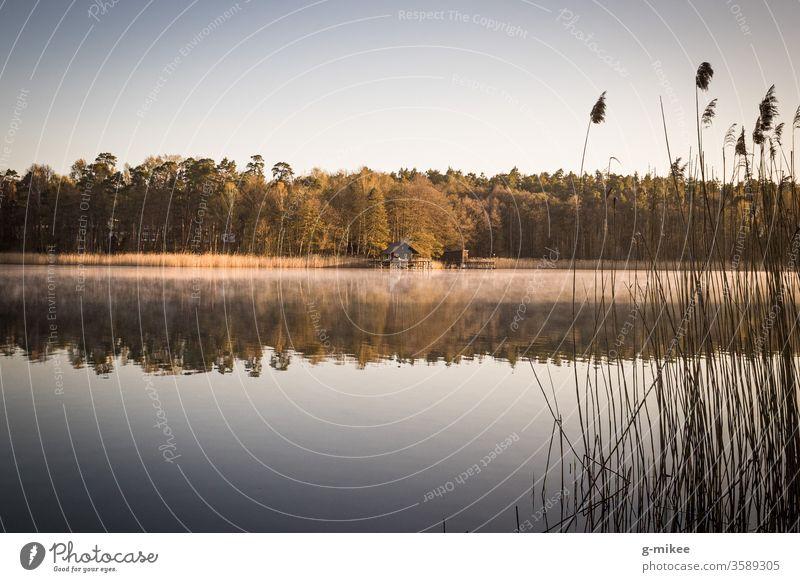 Bootshaus am See Sonnenaufgang Morgens Stille Ruhe Frieden Wärme Natur Wald Wasser Landschaft Ferien & Urlaub & Reisen Farbfoto Außenaufnahme
