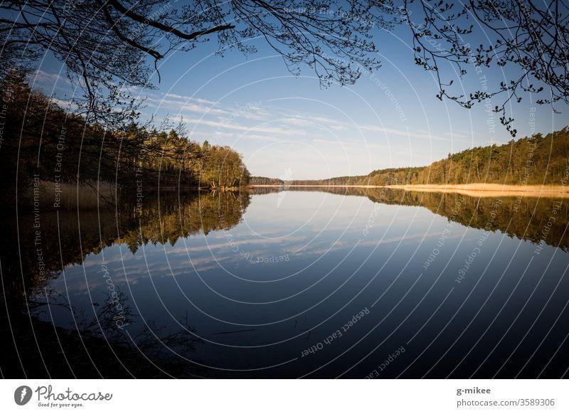 Morgens am See Natur Landschaft Spiegelung Wasser Schorfheide ruhig Außenaufnahme Menschenleer Umwelt Reflexion & Spiegelung Tag Baum stille Farbfoto