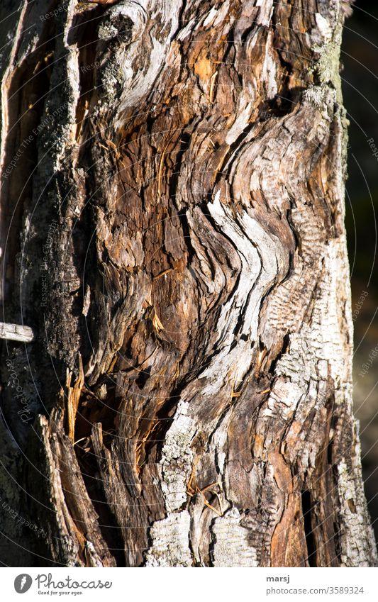Gewellte Holzoptik Holzmaserung Schleife Maserung Holzstruktur Muster abstrakt beruhigend außergewöhnlich natürlich ausschnitt holzhintergrund