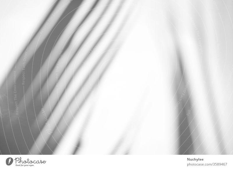 Tropische Palmblätter mit natürlichem Schatten auf weißem Textur-Hintergrund, als Overlay für Produktpräsentation, Hintergrund und Mockup, sommerliches Saisonkonzept, minimaler Trendstil