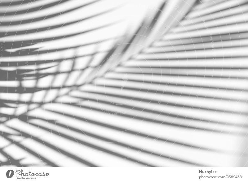 Tropische Palmblätter mit natürlichem Schatten auf weißem Textur-Hintergrund, zur Überlagerung von Produktpräsentation, Hintergrund und Mockup, Sommersaisonkonzept