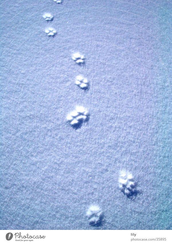 Spuren im Schnee #3 Sonne Katze geheimnisvoll Pfote Fährte Verfolgung Schneedecke