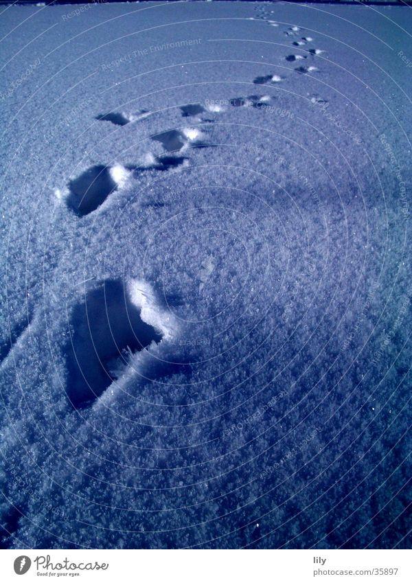 Spuren im Schnee #1 Schneedecke geheimnisvoll Mensch Sonne Verfolgung