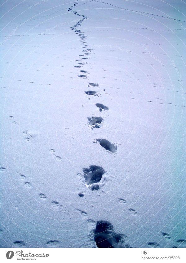 Spuren im Schnee #4 Schneedecke geheimnisvoll Mensch Sonne Verfolgung Fährte