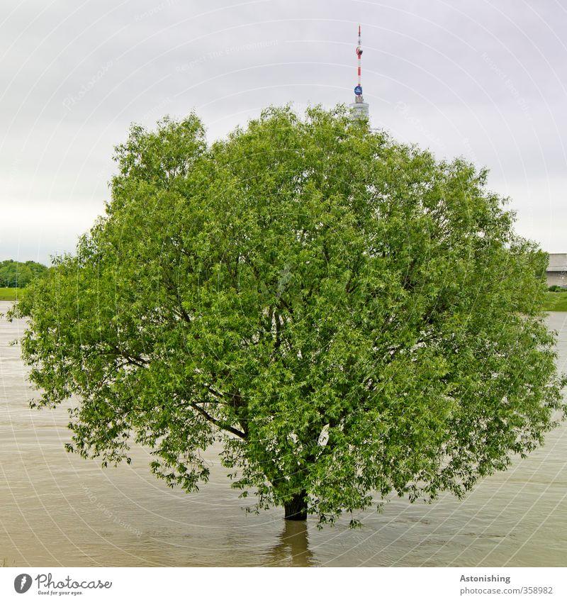 Hochwasser! Umwelt Natur Pflanze Urelemente Wasser Himmel Wolken Gewitterwolken Sommer Wetter schlechtes Wetter Unwetter Regen Baum Fluss Donau Wien Hauptstadt