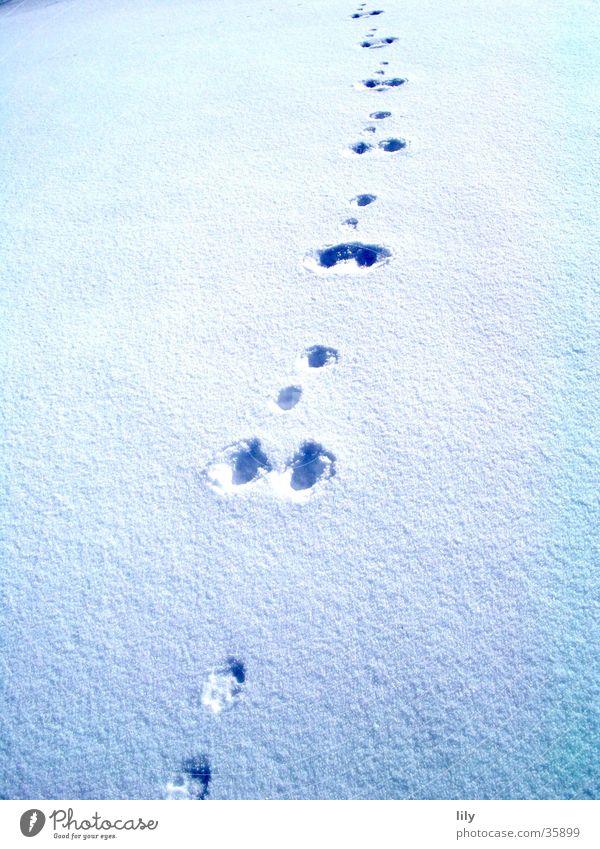 Spuren im Schnee #2 Schneedecke geheimnisvoll Hase (?) Sonne Verfolgung Fährte