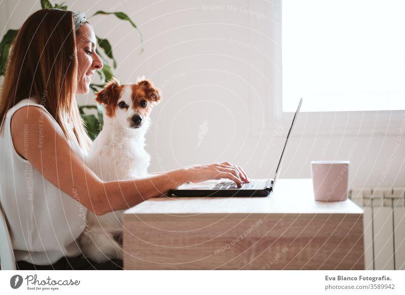junge frau, die zu hause am laptop arbeitet, daneben süßer kleiner hund. bleiben sie sicher während des coronavirus covid-2019 konzepts kuscheln Liebe Kuscheln
