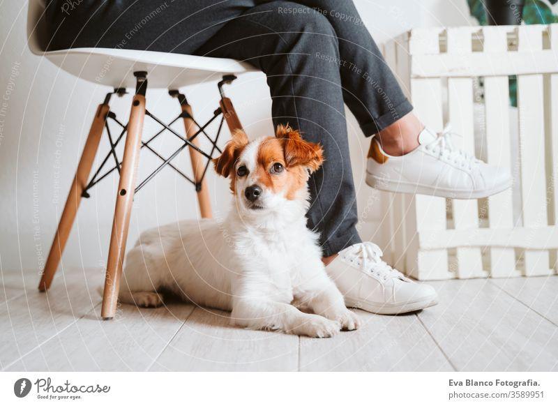 junge Frau zu Hause, die ein Mobiltelefon benutzt, daneben süßer kleiner Hund. work from home Konzept kuscheln Liebe Kuscheln heimwärts Handy arbeiten