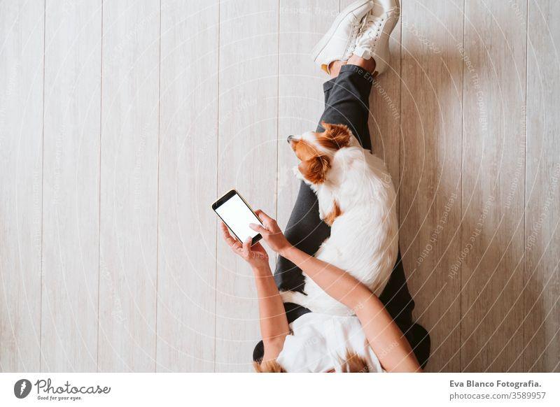 junge Frau zu Hause, die ein Mobiltelefon benutzt, daneben süßer kleiner Hund. work from home Konzept Draufsicht heimwärts Handy arbeiten Technik & Technologie