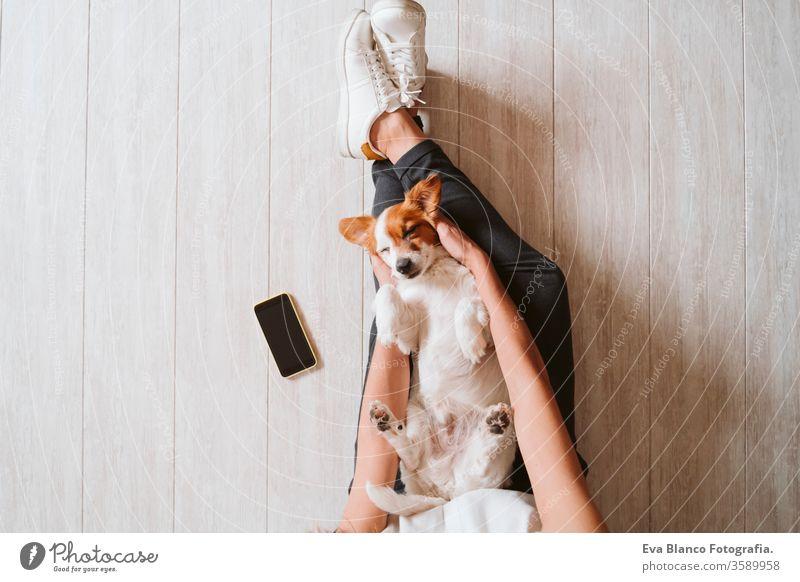 """junge Frau zu Hause, die ihren süßen kleinen Hund kuschelt. Konzept """"Zuhause bleiben kuscheln Draufsicht heimwärts Handy arbeiten Technik & Technologie Haustier"""