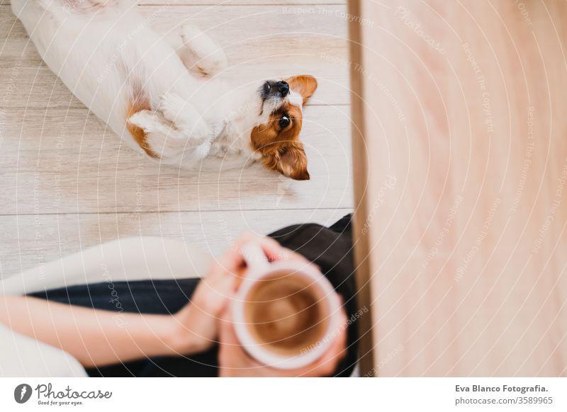 """junge Frau, die zu Hause arbeitet und eine Tasse Kaffee hält. Süßer kleiner Hund, der auf dem Boden liegt. Konzept """"zu Hause bleiben heimwärts Handy arbeiten"""