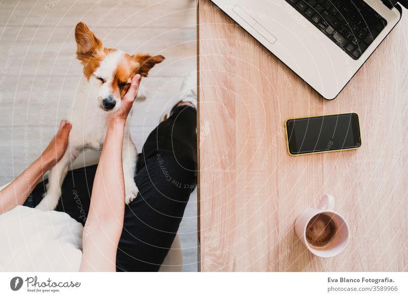 junge Frau, die zu Hause arbeitet und kuschelt Süßer kleiner Hund. Konzept für zu Hause bleiben Kaffee heimwärts Handy arbeiten Technik & Technologie Haustier