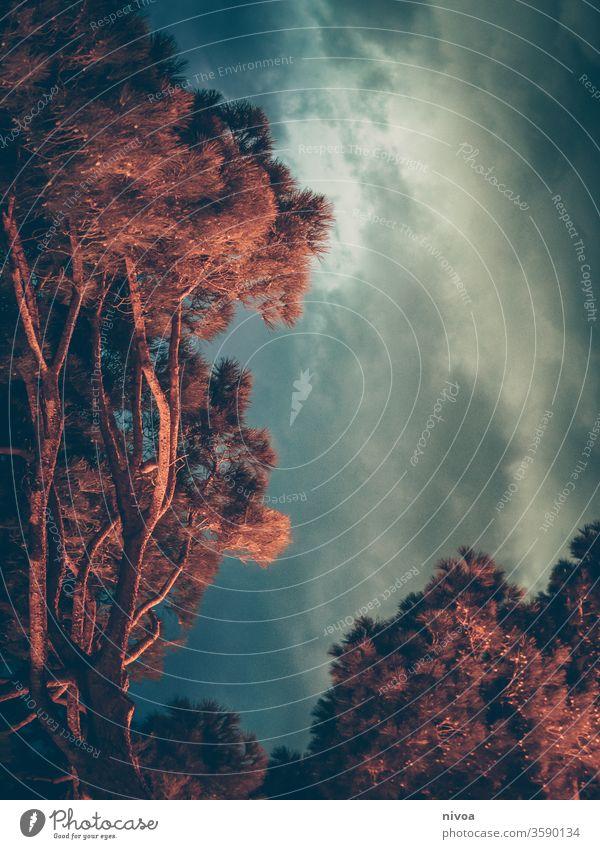Toskana-Bäume bei Nacht Baum Licht Himmel Niederlassungen Außenaufnahme Zweige u. Äste Kontrast Umwelt blau Pflanze orange Farbfoto Natur Menschenleer