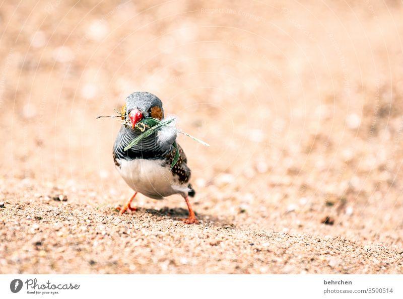 naaa, wie wär es mit nem bisschen gras?! Tiergesicht Wildtier Gefieder Natur außergewöhnlich Fink Zebrafink Vogel Federn Flügel niedlich exotisch fantastisch