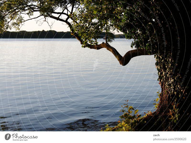 Baum und See Wasser Fluss ruhig Ruhe stille entspannend entspannung Erholung Erholungsgebiet Ast Stamm Natur Stille Reflexion & Spiegelung Idylle Landschaft
