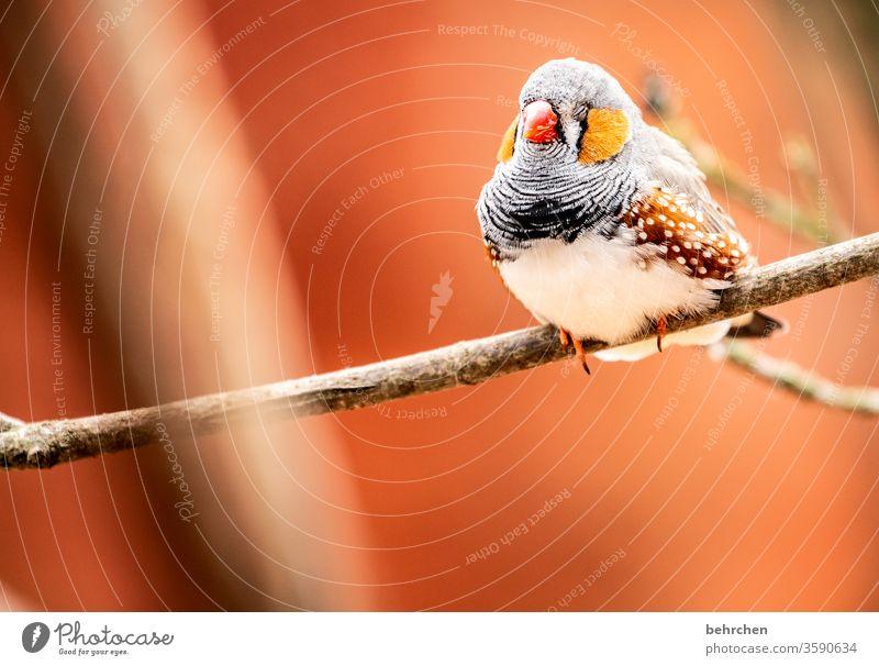 der frühe vogel kann mich mal Tierporträt Unschärfe Kontrast Licht Tag Menschenleer Nahaufnahme Außenaufnahme Farbfoto Schnabel klein schön fantastisch exotisch