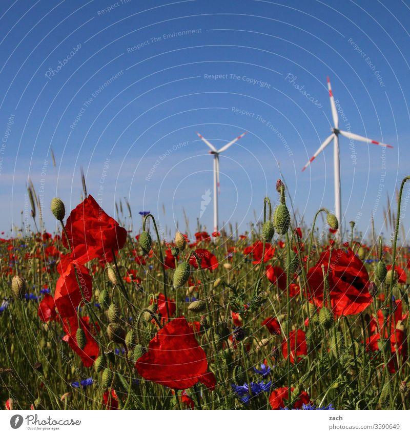 Mohn und Windräder vor blauem Himmel Blume Blüte Pflanze Beet blühen Blühend grün Sommer Frühling Natur Wachstum Blumenwiese Wiese Park Mohnblüte Mohnfeld