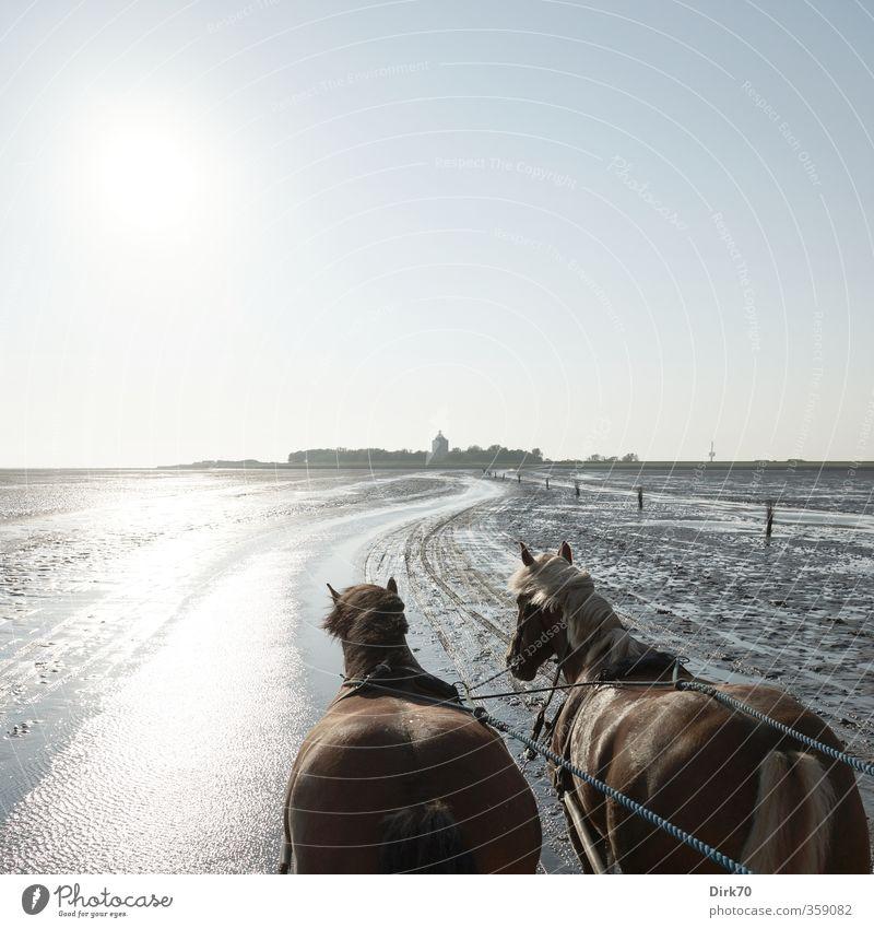 Nach Neuwerk, der Sonne entgegen ... Ausflug Meer Insel Wolkenloser Himmel Horizont Sommer Schönes Wetter Küste Nordsee Turm Leuchtturm Pferdekutsche Tier