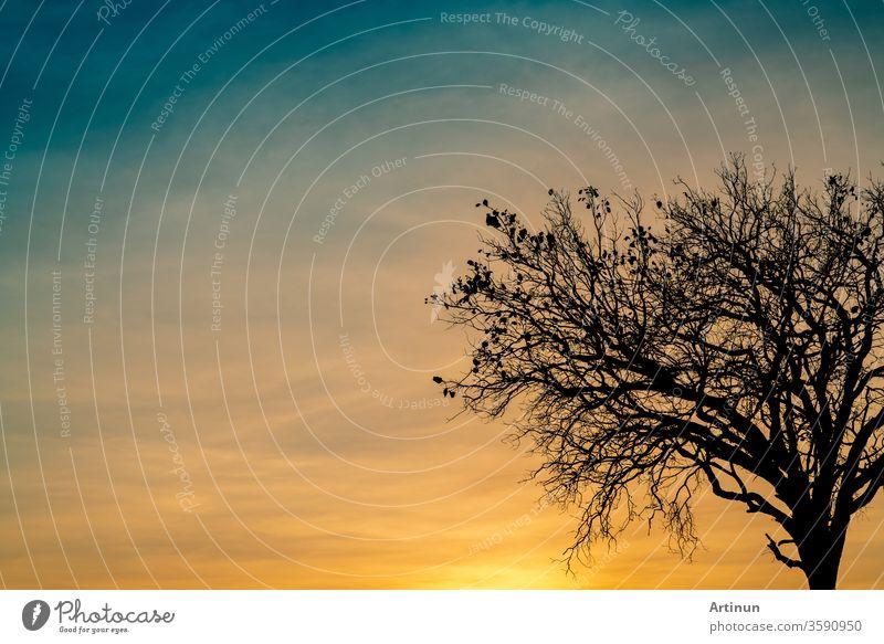 Silhouette eines toten Baumes bei schönem Sonnenuntergang oder Sonnenaufgang am goldenen Himmel. Hintergrund für ein friedliches und ruhiges Konzept. Licht für Hoffnung und Spiritualität. Konzept für Erwachen und Inspiration. Seele und Respekt.