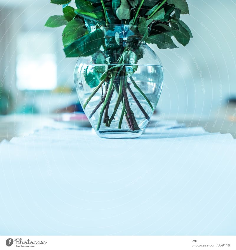 stielvoll Pflanze Blume Stengel Blatt Rose Rosenblätter Dorn blau Vase Blumenvase Glas Wasser Bündel frisch Dekoration & Verzierung Farbfoto Innenaufnahme